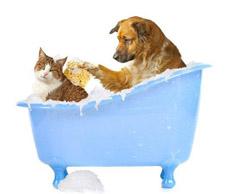 Grooming Tub 2